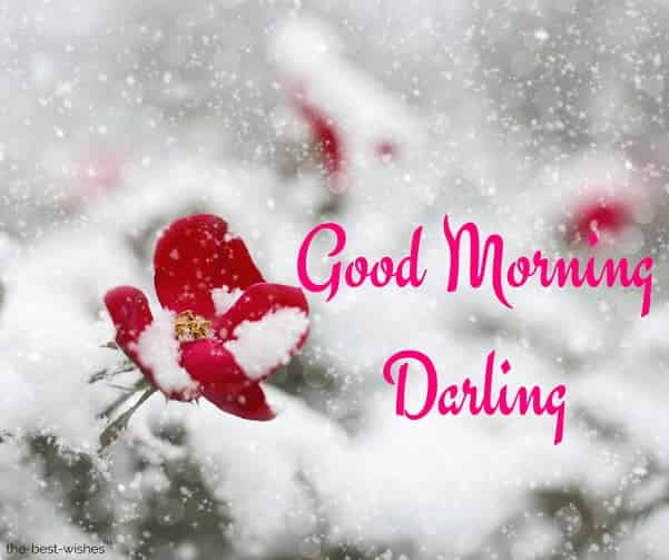 good morning darling photos