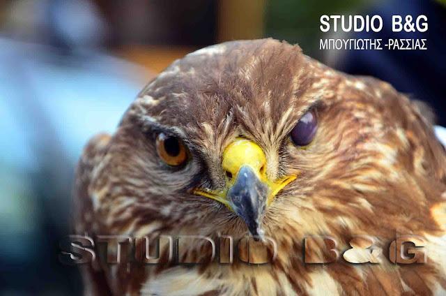 Μέτρα για την προστασία των άγριων πτηνών στην Ελλάδα ζητά η Ευρωπαϊκή Επιτροπή