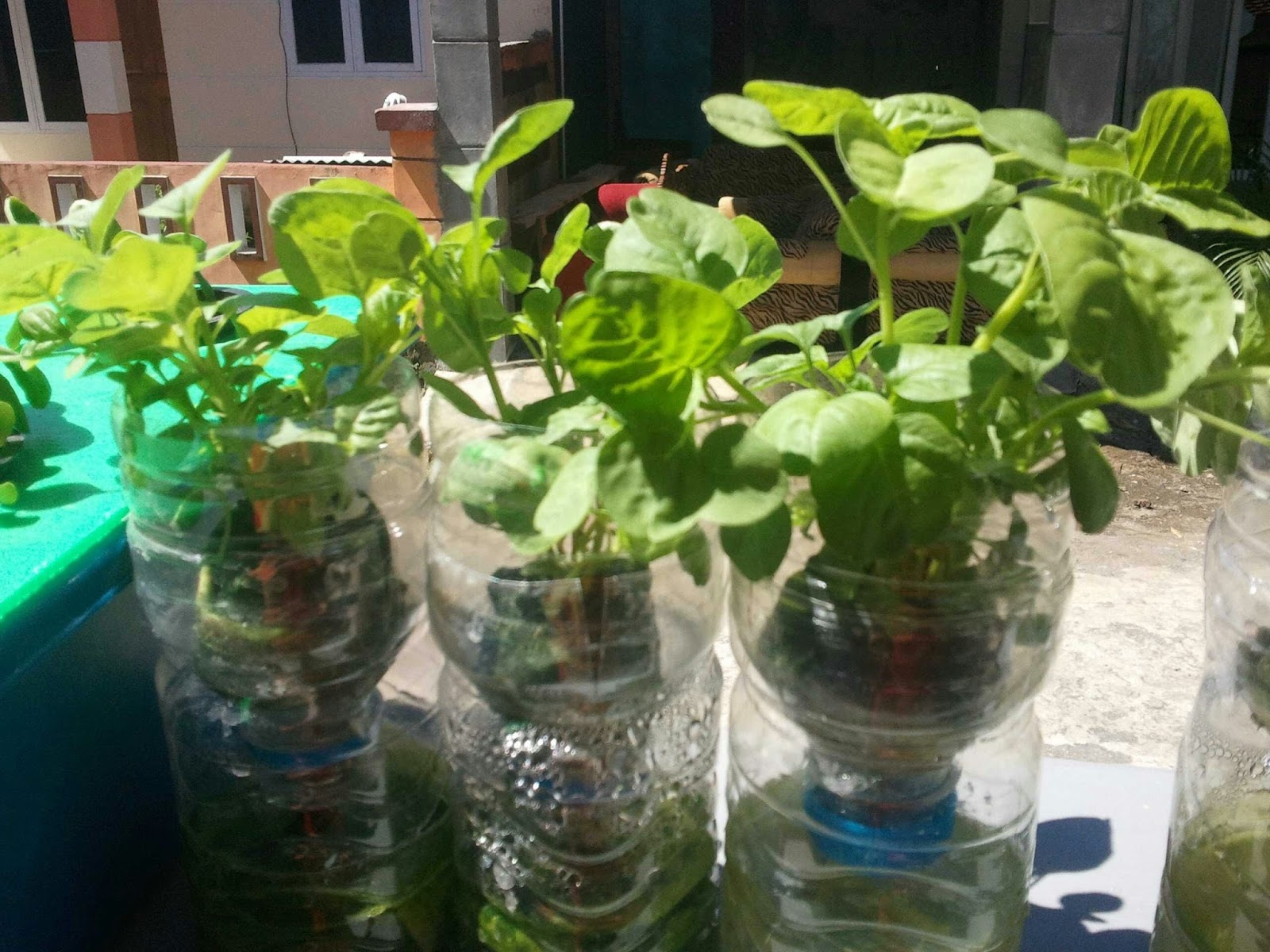 Cara Membuat Hidroponik Dari Botol Plastik Hidrafarm
