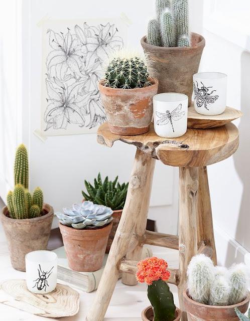 plantas-pela-casa