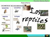 http://cplosangeles.juntaextremadura.net/web/edilim/curso_3/cmedio/animales_vertebrados_3/reptiles/reptiles.html