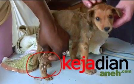 Ngeri, Anjing Penuh Belatung Di Tubuhnya