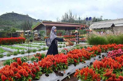Lokasi Taman Bunga Begonia Bandung
