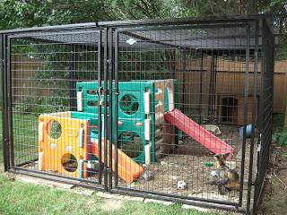 The Pet Fox Pet Fox Enclosures Fencing