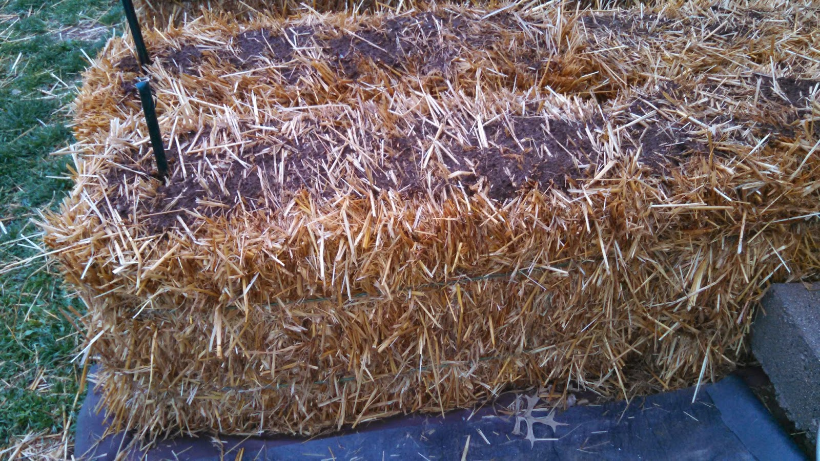 Conditioning the Straw Bales, Day 2