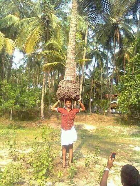 lelaki, gagah, angkat, pokok
