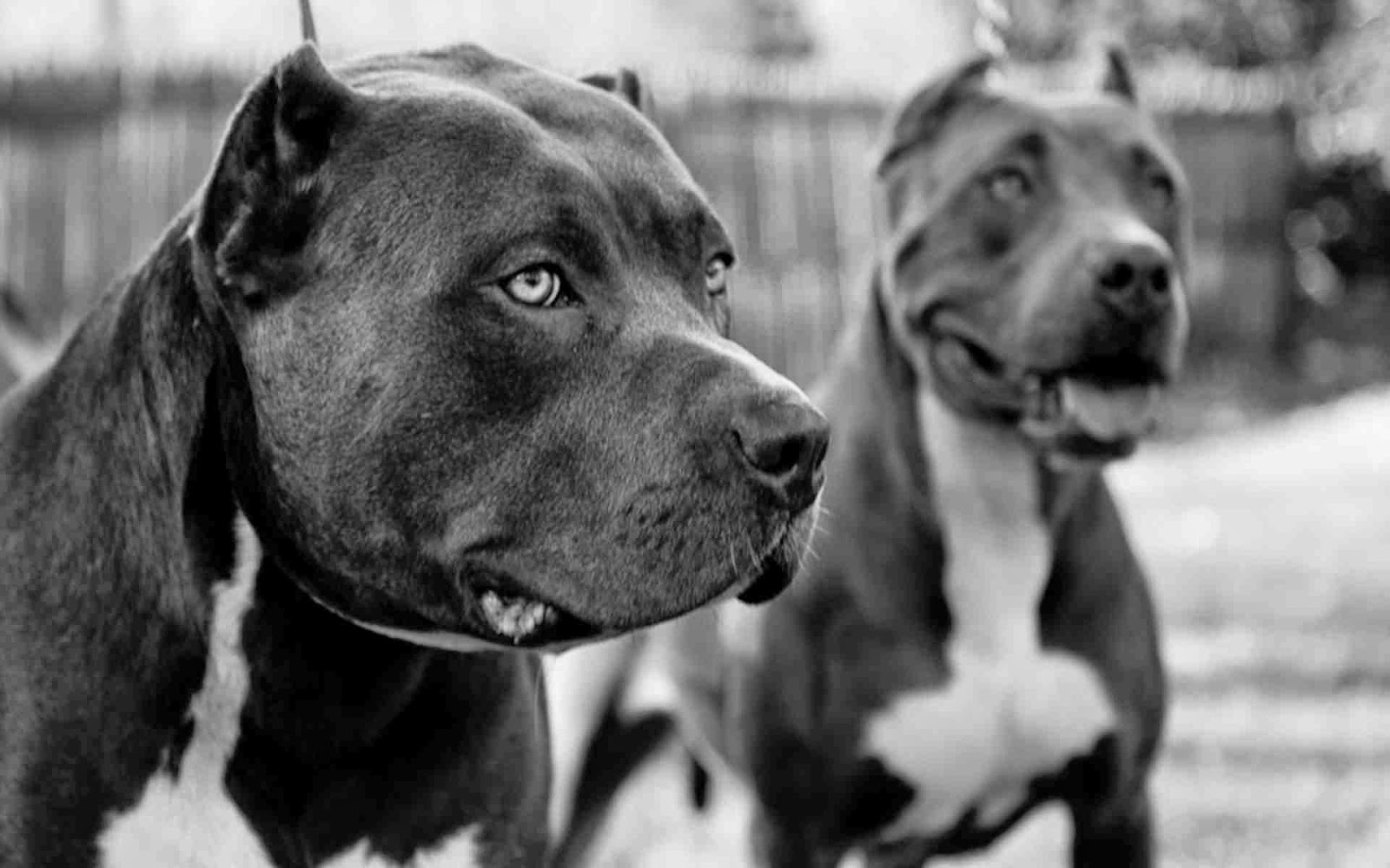 اشرس كلاب فى العالم