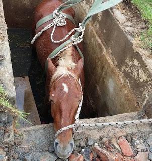 Crianças encontram cavalo 'enterrado' vivo durante velório