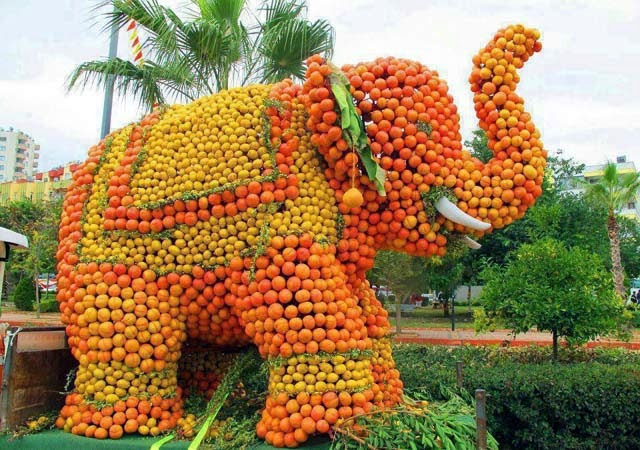 Orange Festival and Tourism Fair  venue shifted to Kolkata on dec 5-7