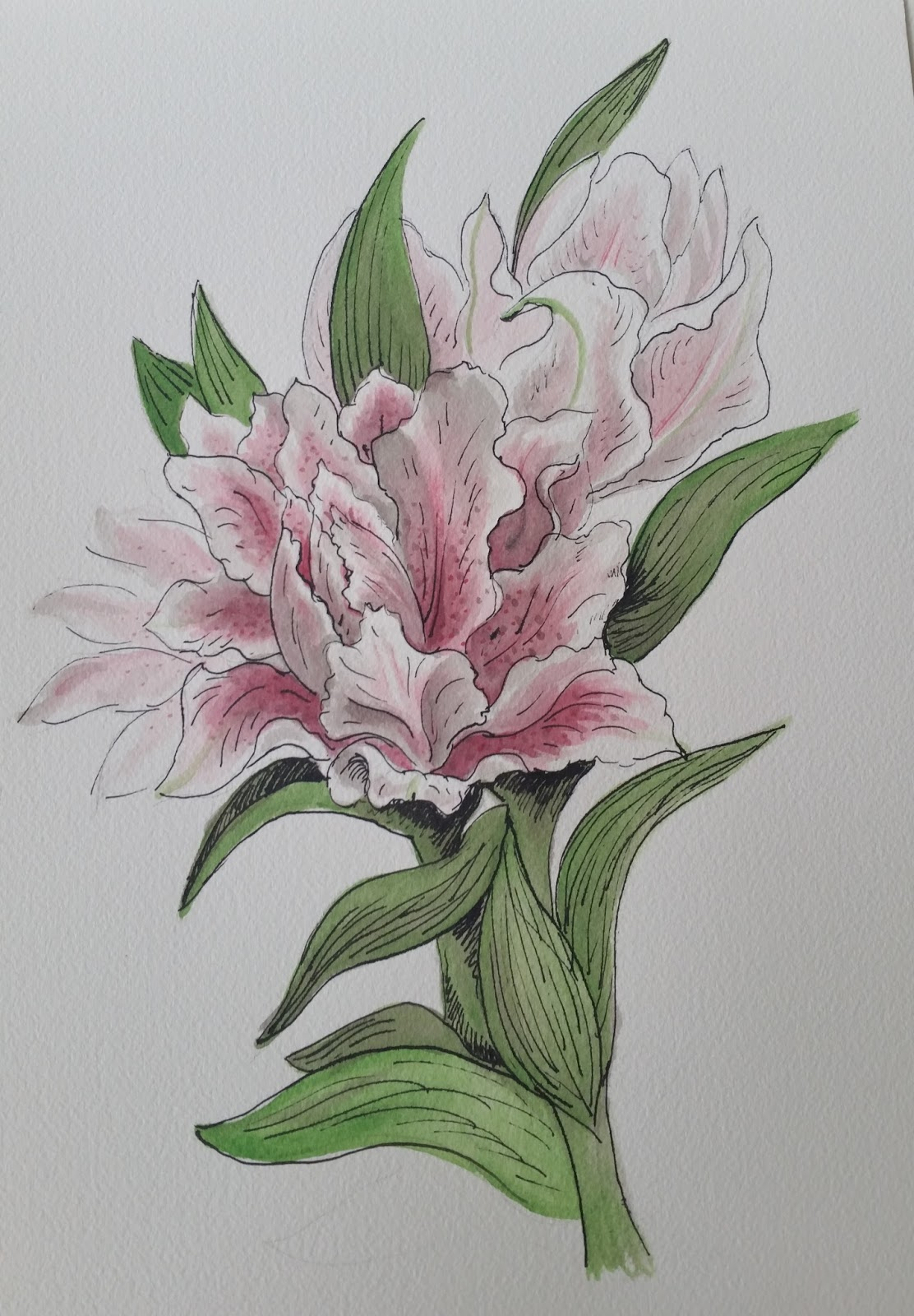 Sketch of the week fragrant lilies izmirmasajfo