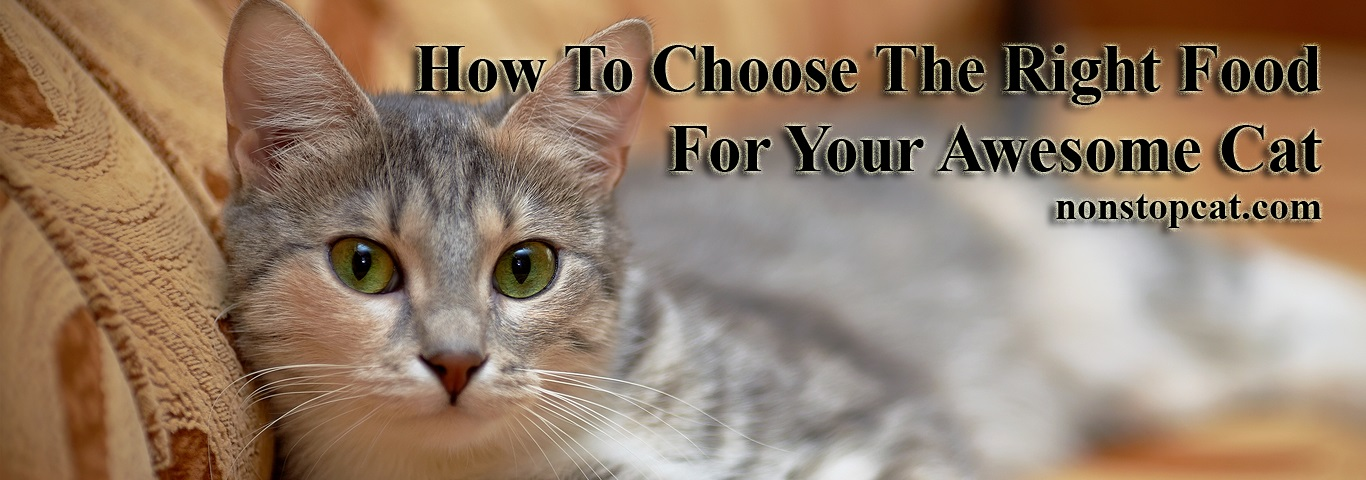 How To Choose The Right Food For Your Awesome Cat