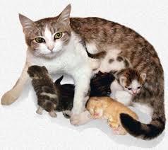 مراحل ولادة القطط بالصور والتفصيل