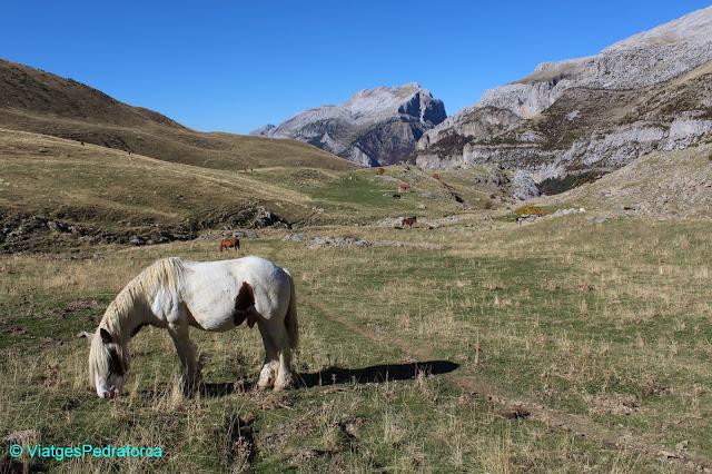 PIrineu Aragonès, Valle de Hecho, Val d'Echo, Parc natural de los Valles Occidentales, colors de tardor, senderisme