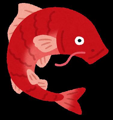 赤い鯉のイラスト