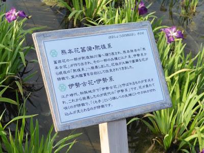 ◆熊本花菖蒲・肥後系 ◆伊勢古花・伊勢系