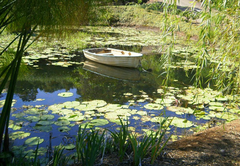 boat in a pond with water lillies