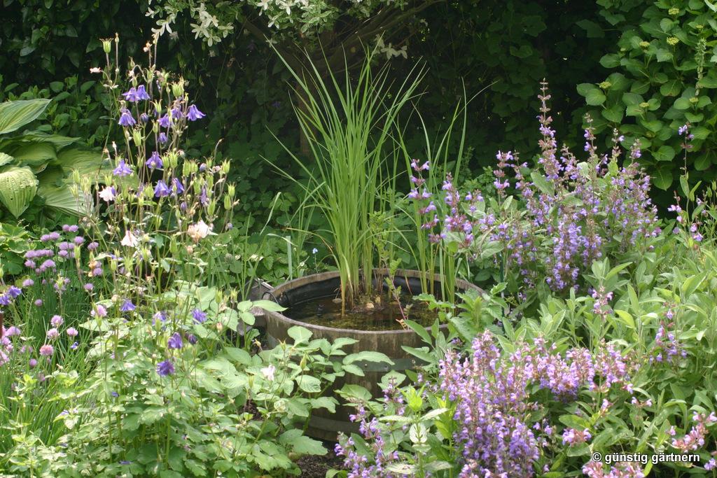 Heimische pflanzen f r den garten von elke schwarzer for Larven im teich