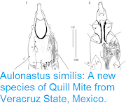 http://sciencythoughts.blogspot.co.uk/2016/08/aulonastus-similis-new-species-of-quill.html