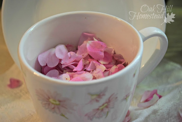 Wild rose petals in a teacup