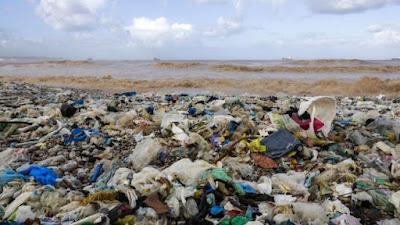 Baleia é encontrada morta com 40 kg de lixo plástico no estômago