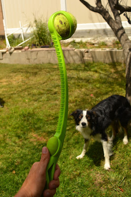Dog toy launcher with squeaker and grooming brush.