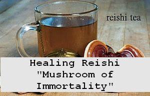 https://foreverhealthy.blogspot.com/2012/04/incredible-healing-reishi-mushroom.html#more