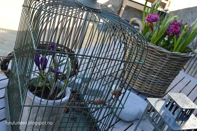 Krukker med forskjellige vårblomster