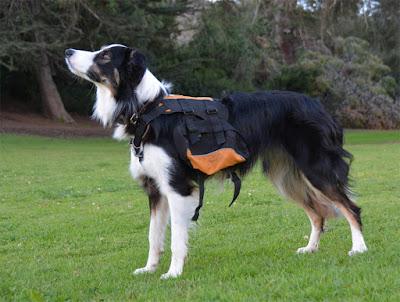 Dog saddlebag backpack