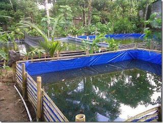 Gerakan 10 ribu kolam ikan Banyuwangi.