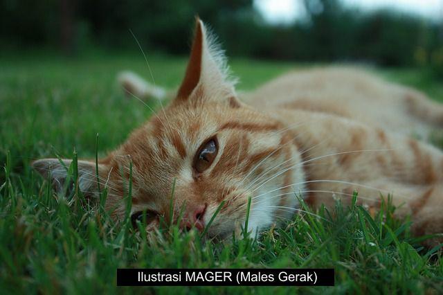Apa itu arti kata Mager?, MAGER adalah singkatan dari Males Gerak, Cara mengatasi Males Gerak, MAGER maksudnya apa?, gambar mager