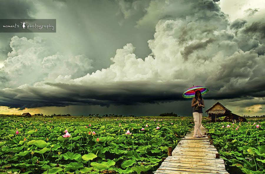 16. lotus fields and the approaching storm