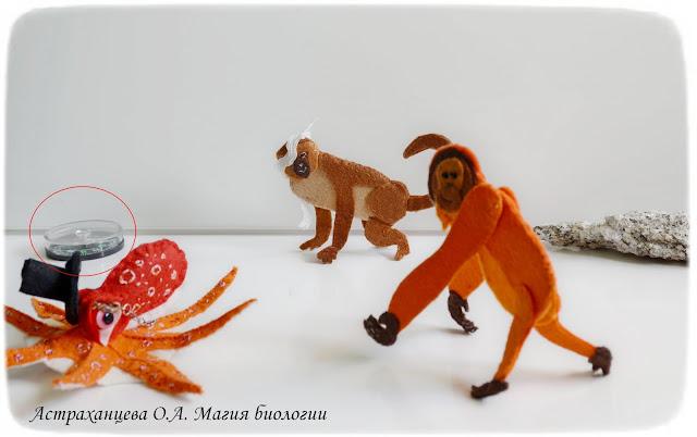 palchikovyj-teatr-orangutan-osminog-martyshka-zrenie