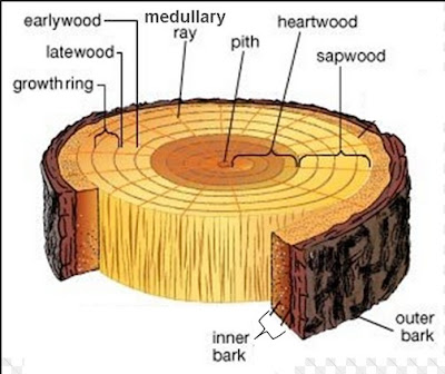 Basic Technology, JS 1, Lesson Plan, Secondary School, Wood Preservative, Moisture Content of wood, wood seasoning, Wood Conversion, Structure of Wood, hardwood, soft wood