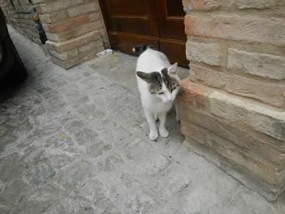 Risultati immagini per treia gatti