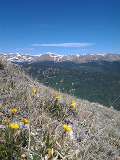 Small yellow and purple wildflowers growing along the side of a mountain side, sun is shinning, sky is blue, snow peaked mountains in the distance.