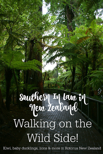 Walking on the Wild Side in Rotorua New Zealand - Gluten Free Coeliac Travel Reviews