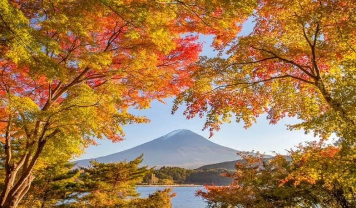 Jawaban dan Pemenang Kuis Musim Gugur 2019 - Radio NHK WORLD