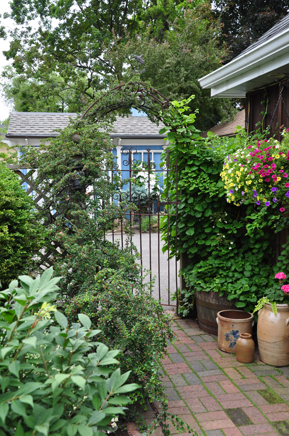 Three Dogs In A Garden: Small Space Gardens Plus Book