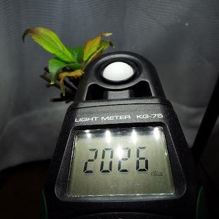 野梅の照度計測