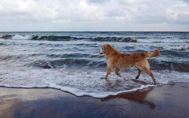Hond op het strand bij de zee