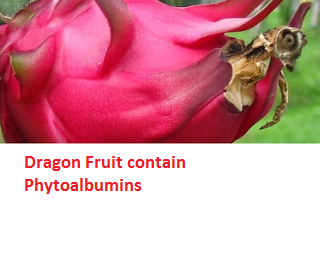 Dragon Fruit contain Phytoalbumins