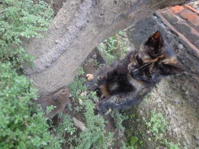 Bahaya Memelihara Kucing Bagi Kesehatan Wanita Hamil di Rumah