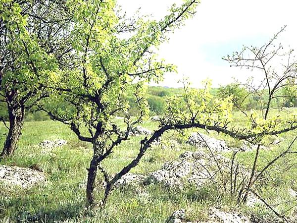Природа недалеко от села Краснолесье