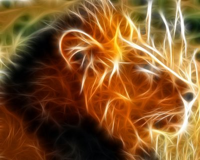 Different Pictures of 3D Lion