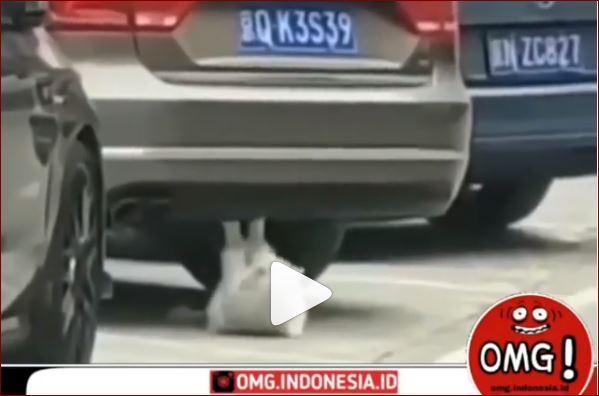 Viral, Seekor Kucing Terekam Sedang Latihan Sit Up Dibawah Mobil Yang Terparkir