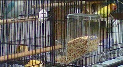 Harga Tempat Pakan Burung Lovebird Terbaru Saat Ini Dan Paling Lengkap