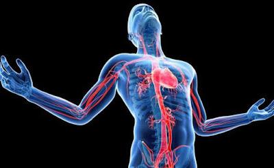 Pengobatan Yang Ampuh Untuk Mengatasi Penyakit Jantung Secara Efektif