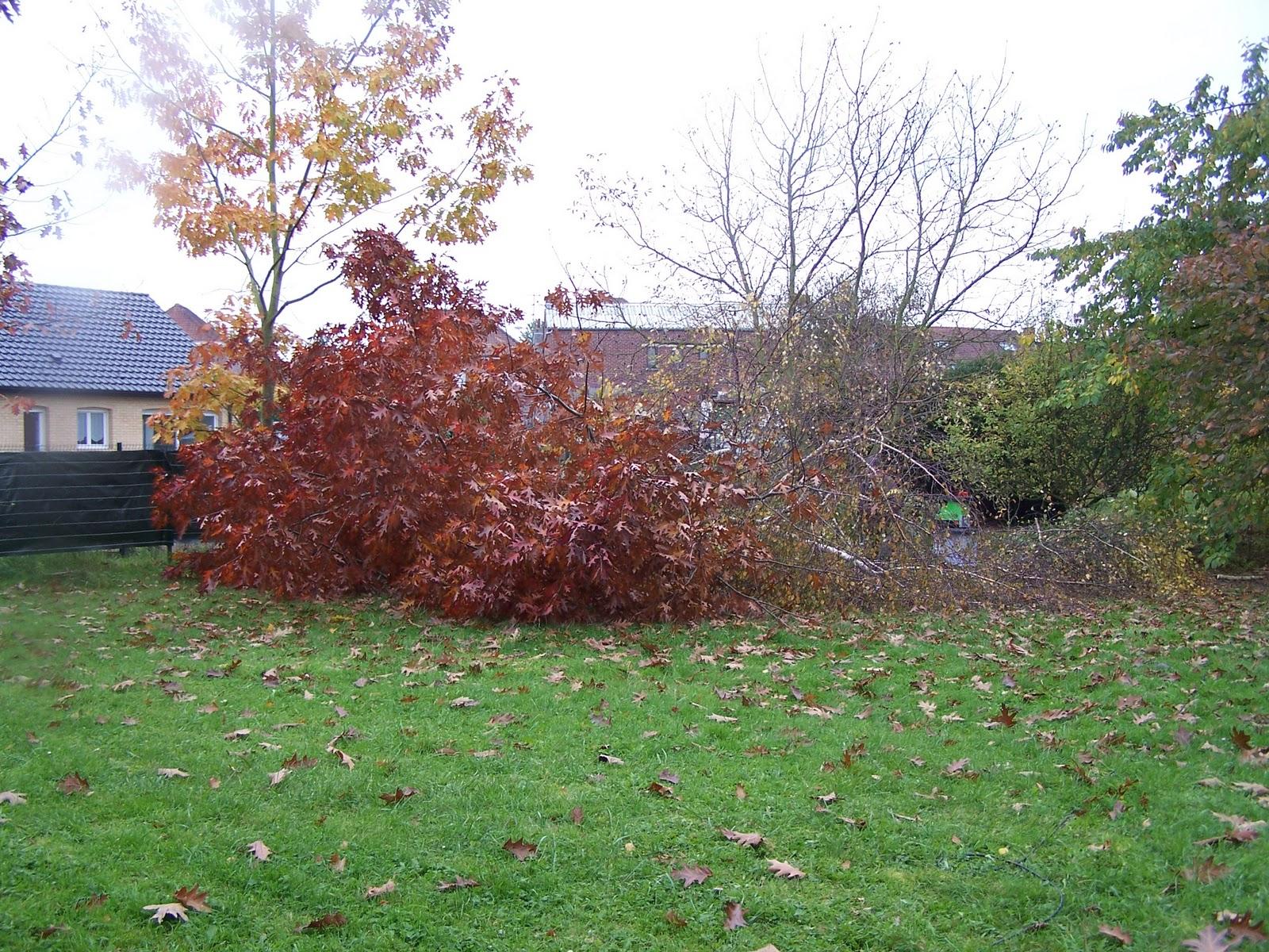 ecolo bio nature permaculture urbaine et jardinage bio objectif abattre des arbres 1 re. Black Bedroom Furniture Sets. Home Design Ideas