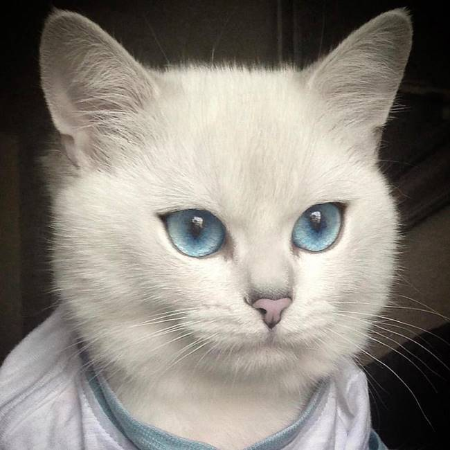 This May Be the Prettiest Cat On the Internet