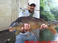 Essen Ikan Mas Aroma Seribu Bunga